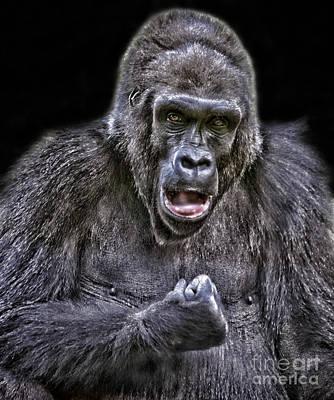 Photograph - Gorilla Ready To Box by Jim Fitzpatrick