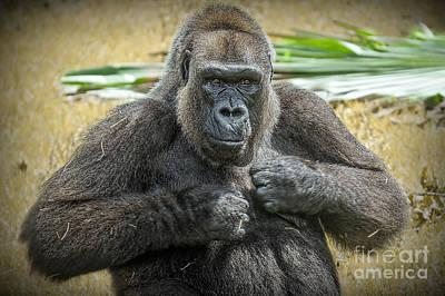 Photograph - Gorilla Warfare Edition 2 by Judy Kay