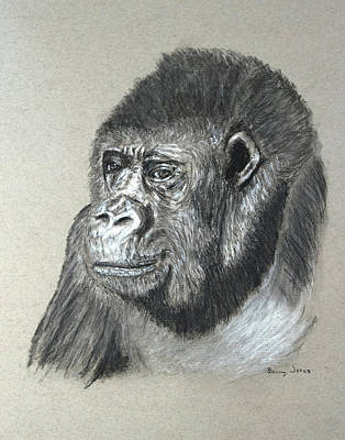 Drawing - Gorilla - Wildlife Art by Barry Jones