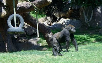 Photograph - Gorillas Mary Joe Baby And Emonty Mother 7 by Phyllis Spoor