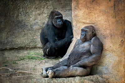 Photograph - Gorillas by Mary Lee Dereske
