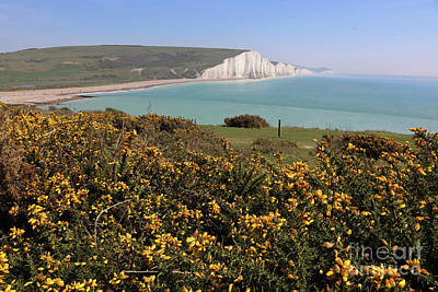 Photograph - Gorse And Seven Sisters by Julia Gavin
