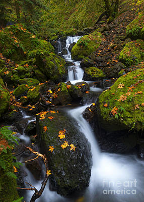 Photograph - Gorton Creek Autumn by Mike Dawson