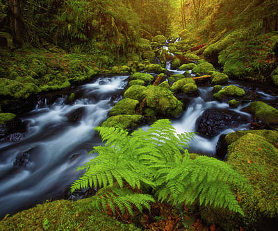 Print featuring the photograph Gorton Creek Fern by Darren White