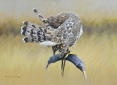Art Print featuring the painting Goshawk Preening by Alan M Hunt