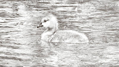 Wall Art - Drawing - Gosling On The Go-pencil by Laurie Musser