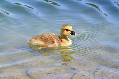 Photograph - Gosling Ripples by Shoal Hollingsworth