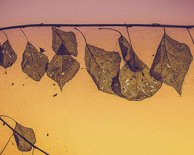 Photograph - Gossamer And Gold by Veronika Countryman