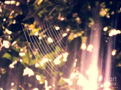 Photograph - Gossamer Glow by Megan Dirsa-DuBois