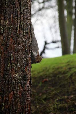 Photograph - Got A Nut  by Jez C Self