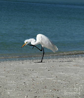 Photograph - Got An Itch by Christiane Schulze Art And Photography