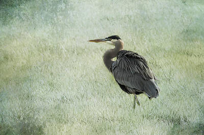 Photograph - Got Great Plumage by Belinda Greb
