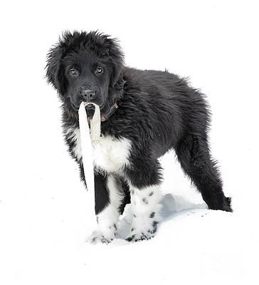 Photograph - Pup Got Leash? by Debbie Stahre