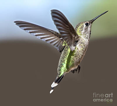 Hummingbird Photograph - Got My Eye On You by David Millenheft