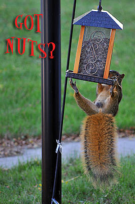 Photograph - Got Nuts by Gene Tatroe