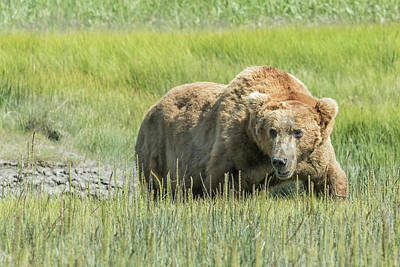 Photograph - Got Swagger by Belinda Greb