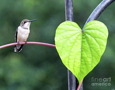 Photograph - Got To Love A Hummer by Lizi Beard-Ward