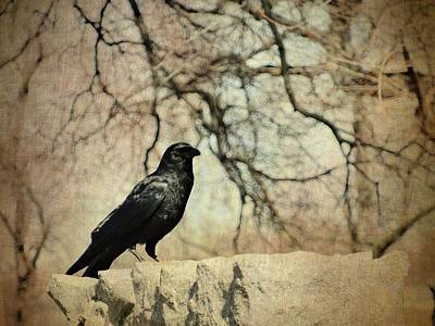 Gothic Branches Behind The Black Crow Print by Gothicrow Images