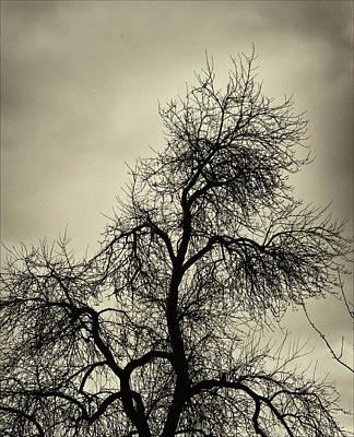 Gothic Tree Art Print by Robert Ullmann