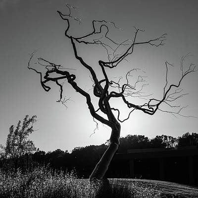 Photograph - Gothic Twisted Tree - Black And White by Gregory Ballos