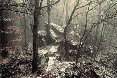 Photograph - Gothic Winter Woods  by Jenny Rainbow