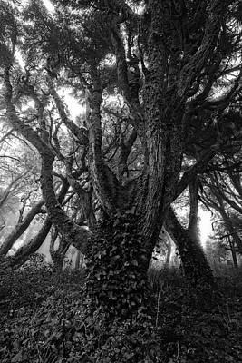 Photograph - Gothic Woods I by Marco Oliveira