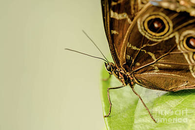 Morpho Wall Art - Photograph - Learning To Fly by DiFigiano Photography