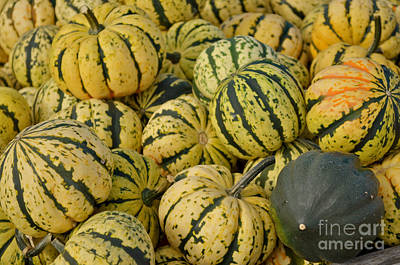 Gourd Harvest - Yellow And Green Art Print by Jason Freedman