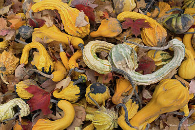 Photograph - Gourds And Autumn Leaves #2 by Barbara McMahon