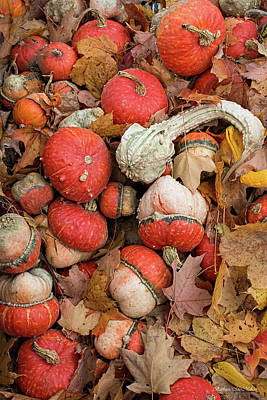 Photograph - Gourds And Autumn Leaves by Barbara McMahon