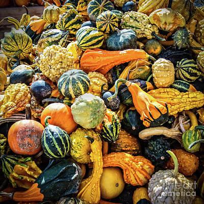 Photograph - Gourds Delight by Robert Bales