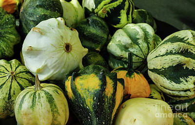 Photograph - Gourds Galore by Jennifer White