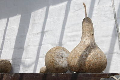 Heligan Photograph - Gourds In Shadow by Lauri Novak