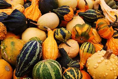 Gourds Art Print by Jame Hayes