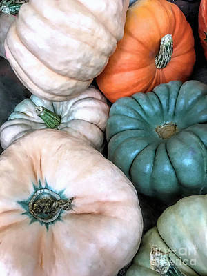Photograph - Gourds by Janice Drew