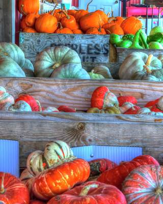 Photograph - Gourds Of Autumn by Jerry Sodorff