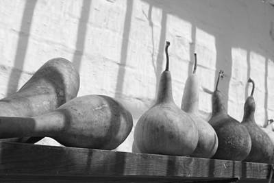Heligan Photograph - Gourds On A Shelf by Lauri Novak