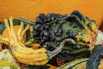 Photograph - Gourds by Pamela Williams
