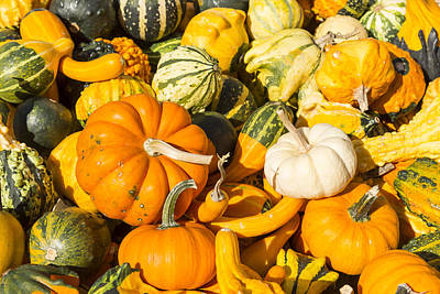 Guns Arms And Weapons - Gourds Pile 1 A by John Brueske