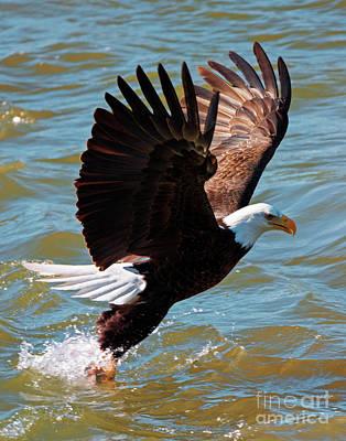 Eagle Photograph - Grabbing Dinner by Mike Dawson