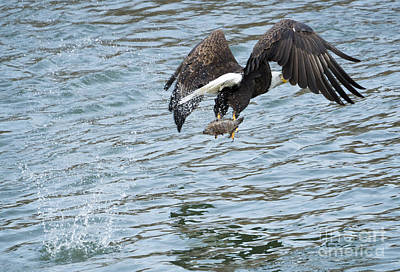 Eagle Photograph - Grabbing Lunch by Mike Dawson