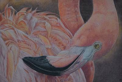 Duck Water Pencil Drawing - Grace - Flamingo by Biophilic Art