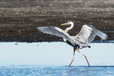 Photograph - Grace In Motion by Dawn Currie