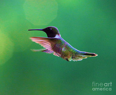 Royalty-Free and Rights-Managed Images - Grace of flight by Jeff Swan