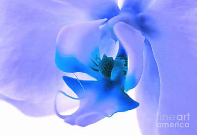 Photograph - Graceful Beauty by Krissy Katsimbras