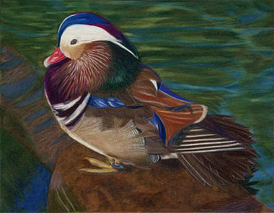 Mandarin Drawing - Resplendant by Ekta Gupta