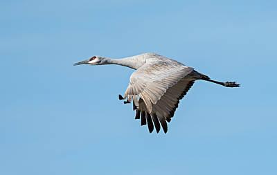 Photograph - Graceful Flight by Loree Johnson