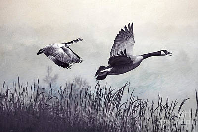 Canadian Geese Photograph - Graceful Geese by Laura D Young