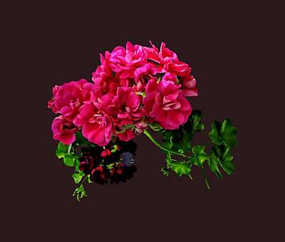 Graceful Geraniums Art Print