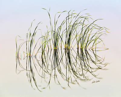 Graceful Grass Art Print by Bill Kesler